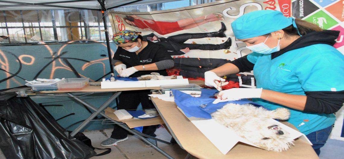Realiza CACF primera jornada integral de salud animal de 2018 en la San Bosco