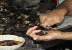 Declara Secretaría de Salud veda precautoria sanitaria de moluscos bivalvos