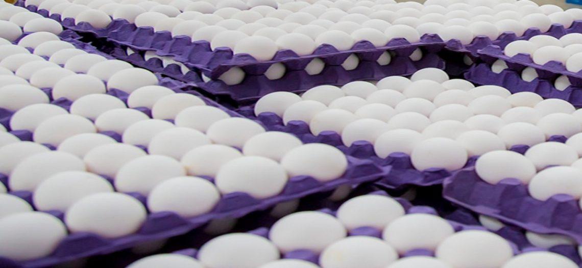 Retiran millones de huevos en EU por contaminación bacterial