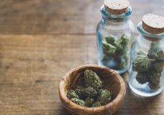 Cofepris analiza 19 solicitudes para uso lúdico de la mariguana