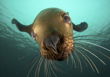 Evaluarán efectos del cambio climático con focas