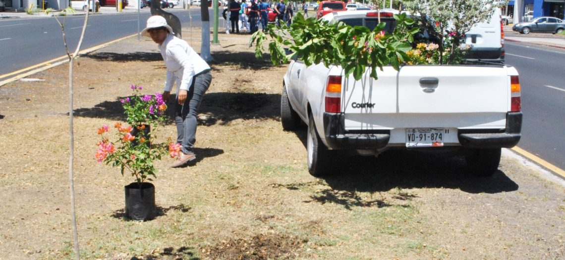 Refuerzan reforestación de bulevares como estrategia contra el calor