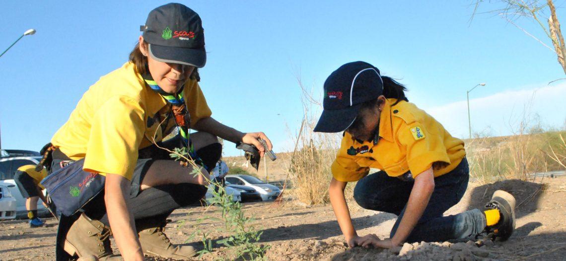 Reforestan niños Scouts de Hermosillo las inmediaciones de La Sauceda