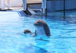 En buen estado de salud cría delfín