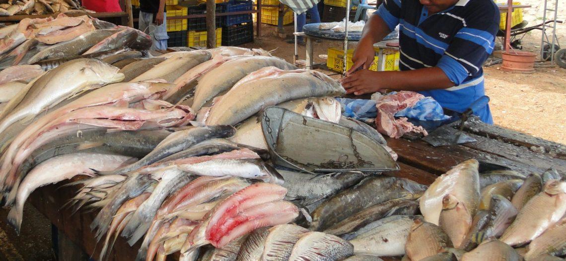 Pescadores donan una tonelada de pescado para migrantes e indigentes