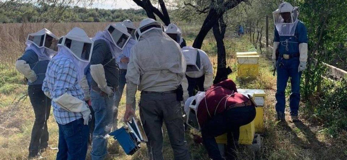 Capacita Ayuntamiento de Hermosillo a futuros apicultores