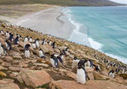 Reactivará Argentina reclamo sobre las Islas Malvinas